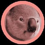 rond_koala-150x150