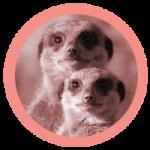 rond_suricate-150x150